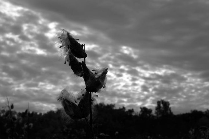 Praying-in-the-land-of-milkweed-800-50